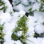 大寒  寒さに厚着より栄養補給 インフルエンザ予防