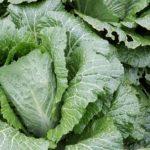 1日に必要な野菜の摂取量とは?野菜をたくさん食べる為のポイント!